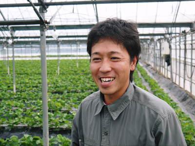 紅ほっぺ イチゴ一筋13年の親子の匠が育て上げる『紅ほっぺ』の開花(その2)_a0254656_15173929.jpg