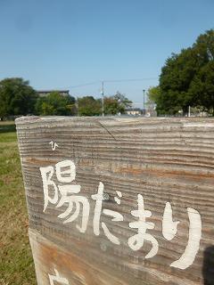 fine autumn day! サージュとお花屋さん巡り_a0165160_6452048.jpg