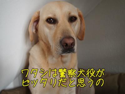 c0211876_7143332.jpg