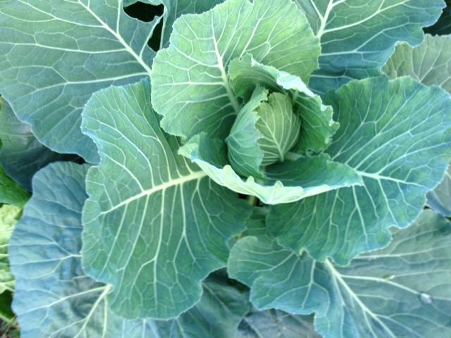 冬野菜_f0204295_18451526.jpg