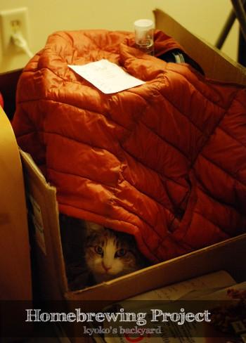 猫のお手伝い_b0253205_554412.jpg