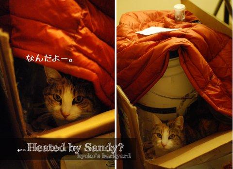 猫のお手伝い_b0253205_555028.jpg