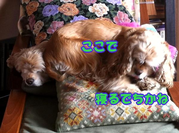 b0067012_0371432.jpg