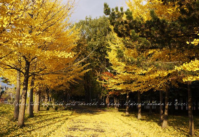 秋も昨日まで_f0032814_23331283.jpg