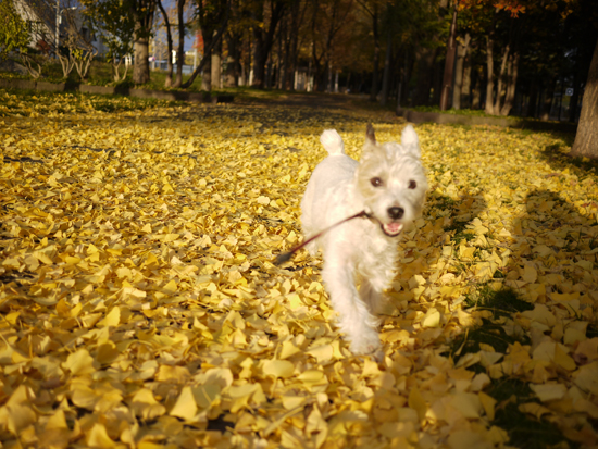 秋も昨日まで_f0032814_23331583.jpg