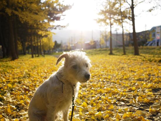 秋も昨日まで_f0032814_2333177.jpg