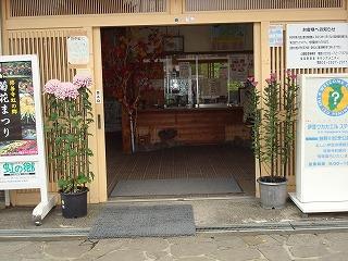 菊花がきれいです_d0155416_10503050.jpg