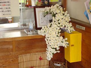 菊花がきれいです_d0155416_1051104.jpg