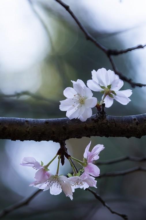 f0173817_20111912.jpg
