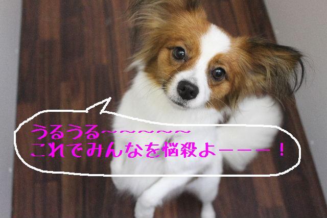 小学生ぶり!!_b0130018_14481391.jpg