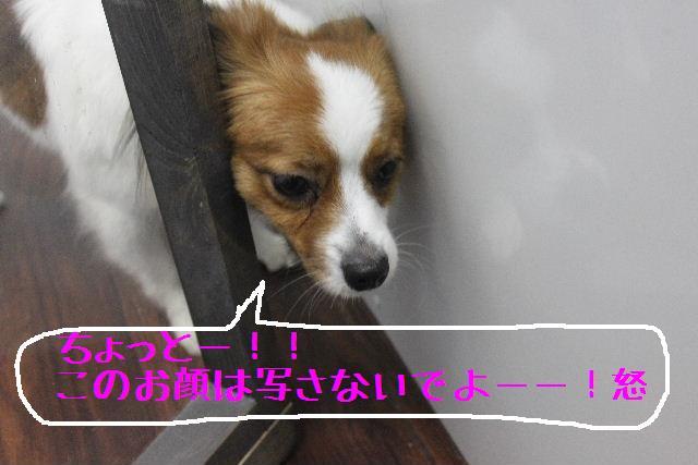 小学生ぶり!!_b0130018_14482422.jpg