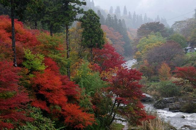 雨の紅葉_c0047422_18221256.jpg