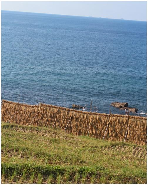 北陸旅 白米の千枚田 心に残る風景_c0141025_2305778.jpg