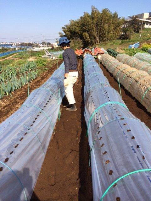 新しい穴なしトンネルを後蒔きのブロッコリーの子供に被せます_c0222448_12244149.jpg
