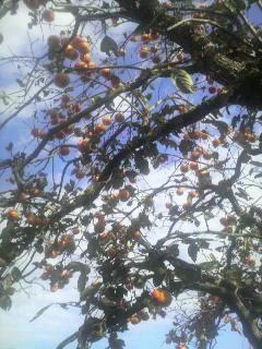 「牧場の柿」_e0063268_1222835.jpg
