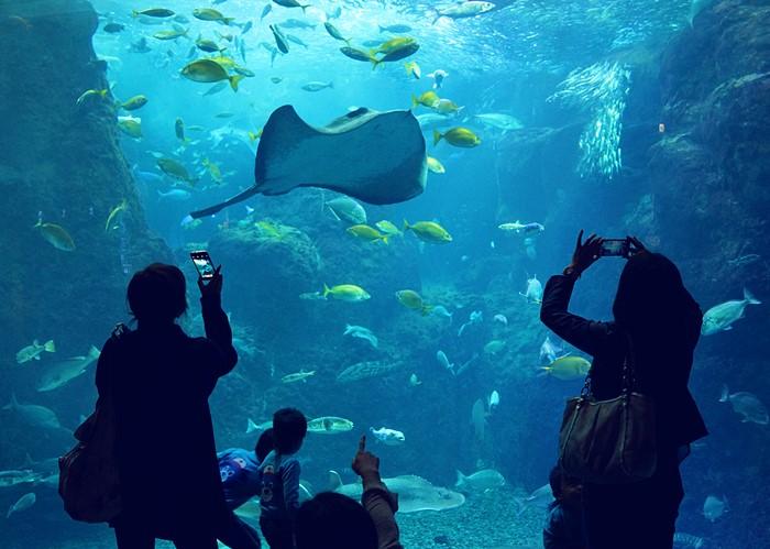 新江ノ島水族館 ハロウィン_b0145398_22243946.jpg