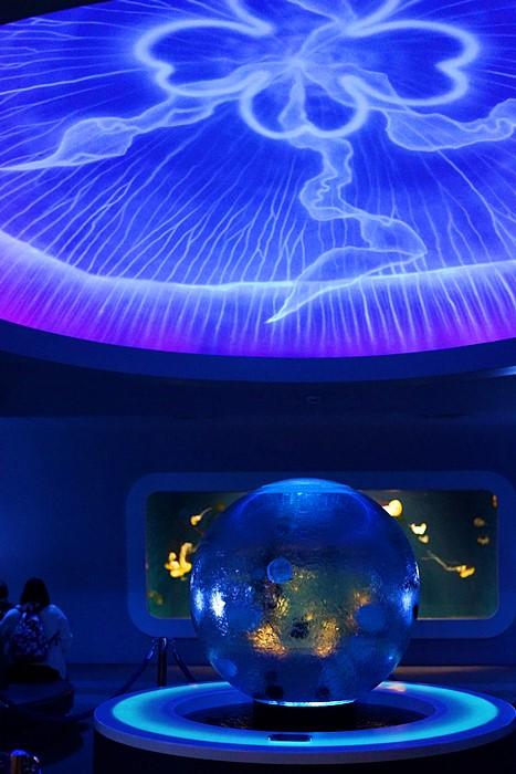 新江ノ島水族館のクラゲ_b0145398_22401581.jpg