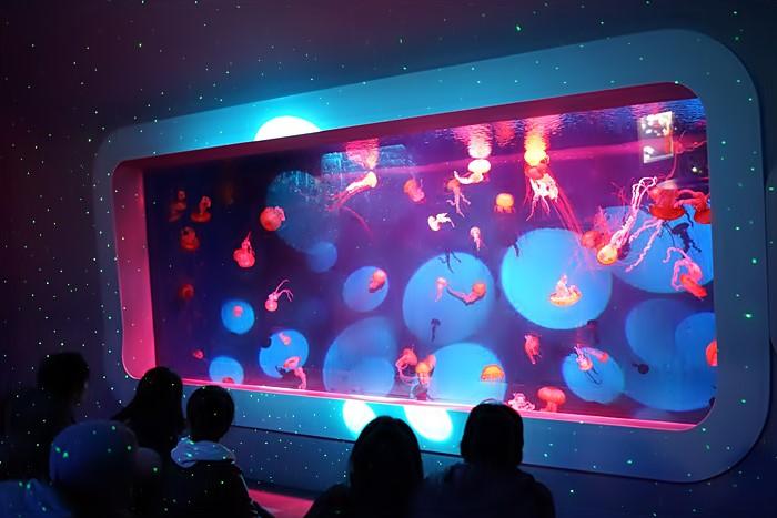 新江ノ島水族館のクラゲ_b0145398_22415477.jpg