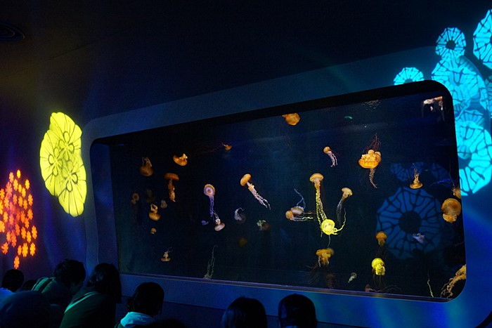 新江ノ島水族館のクラゲ_b0145398_2242645.jpg