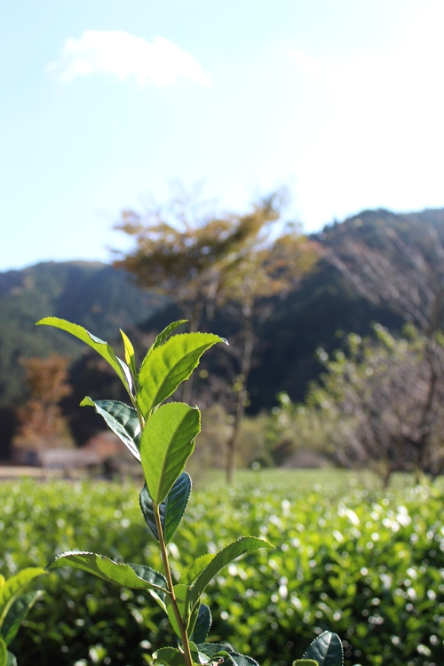 茶と魚_b0220318_416196.jpg