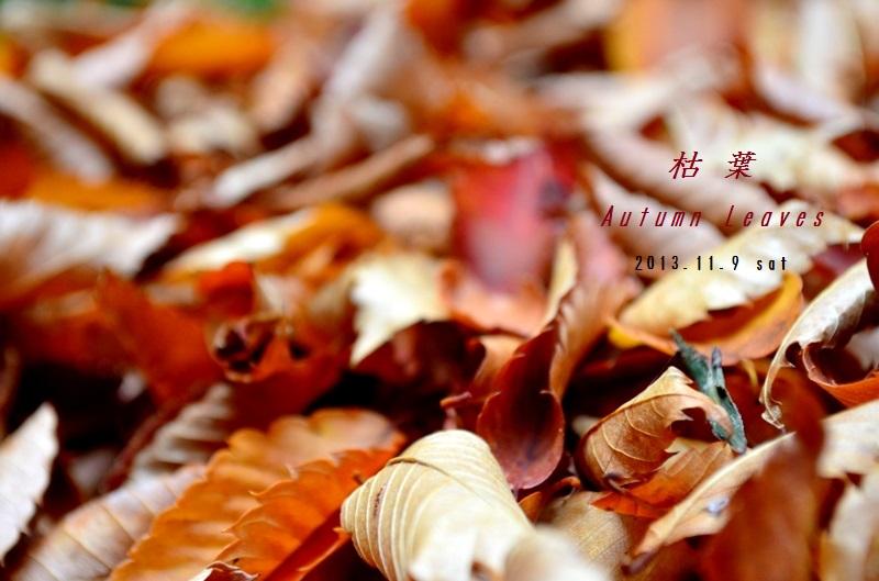 """""""トラッド&キュートなAutumn Leaves お出掛けStyle\""""---2013~2014 Winter Outer Selection Monthly No6---_d0153941_1854987.jpg"""