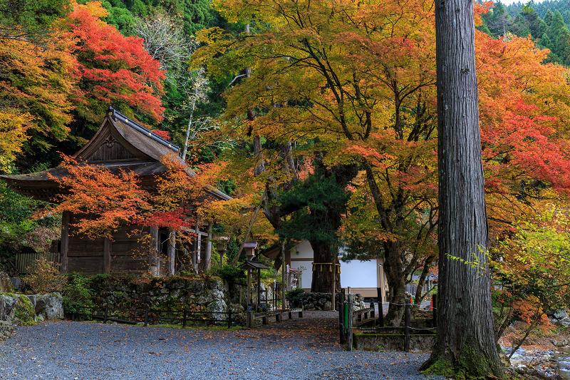 Opening!京都の紅葉2013 大悲山峰定寺_f0155048_18103318.jpg