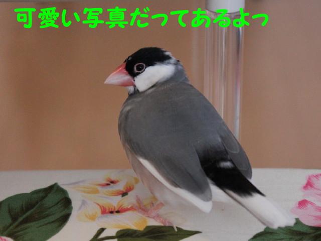 b0158061_2253554.jpg