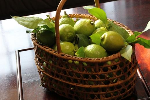 レモンの収穫_b0214473_18424352.jpg