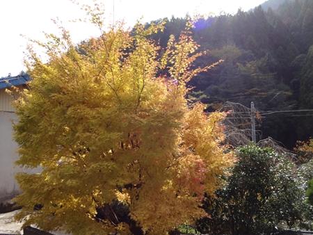 初めての霧越峠と紅葉狩り_e0201281_2122884.jpg