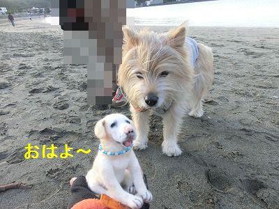審査員特別賞_e0222588_14352473.jpg