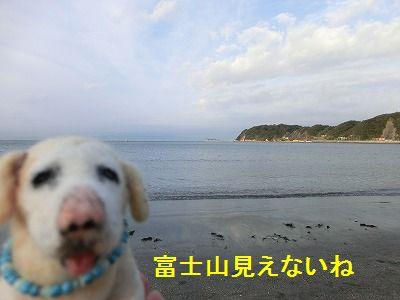 審査員特別賞_e0222588_1435786.jpg