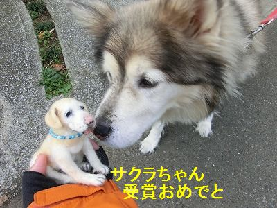 審査員特別賞_e0222588_14395536.jpg