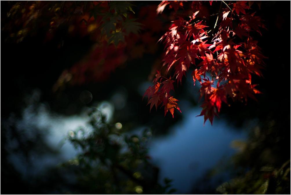 のんたん秋の別邸 mansion for autumn #LEICA M_c0065410_0524280.jpg