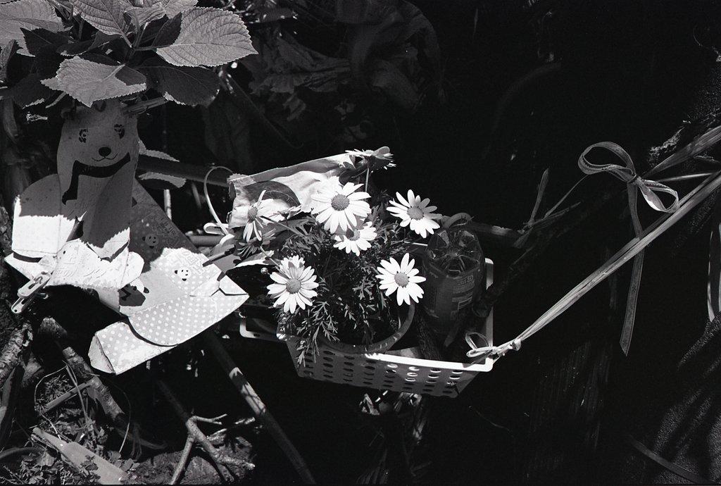 e0253132_1759368.jpg
