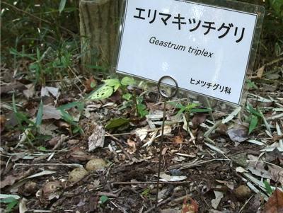 神代植物公園にきのこの名札が_f0108133_15315117.jpg