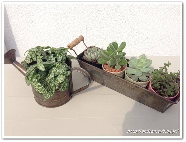 【玄関】 多肉植物と幼稚園椅子_c0176271_23162171.jpg