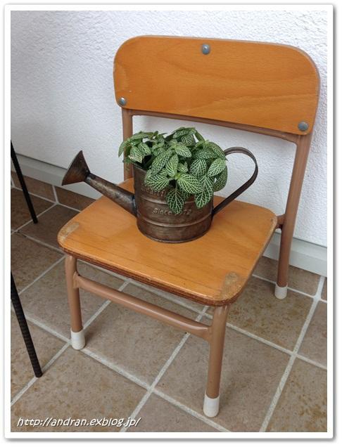 【玄関】 多肉植物と幼稚園椅子_c0176271_23191961.jpg