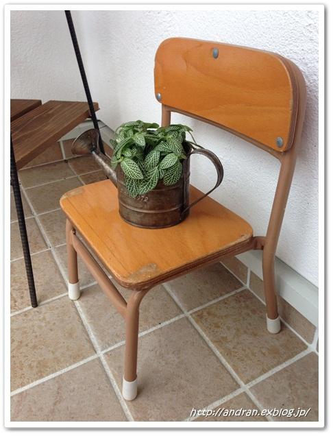 【玄関】 多肉植物と幼稚園椅子_c0176271_23192727.jpg