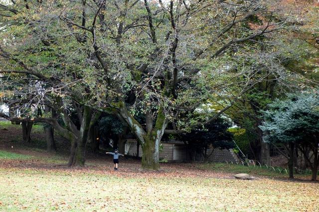 秋模様、と、脱力画像(2)_c0005077_16153444.jpg