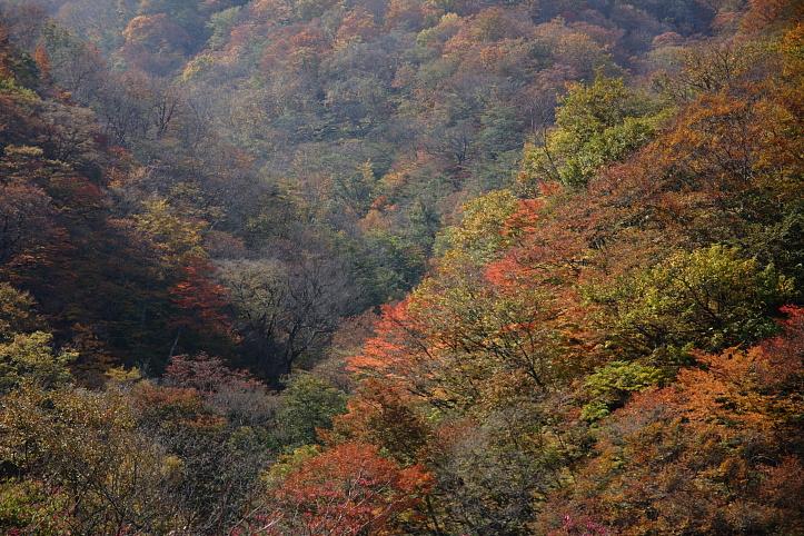 西郷村 甲子高原・きびたきトンネルの紅葉 _e0165983_1049388.jpg