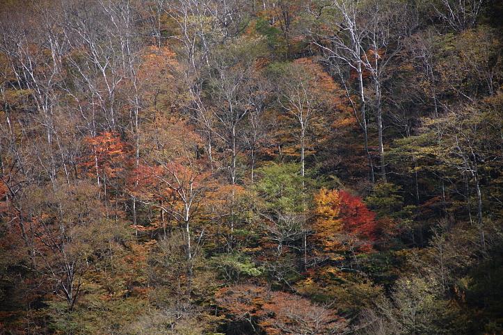 西郷村 甲子高原・きびたきトンネルの紅葉 _e0165983_1049396.jpg