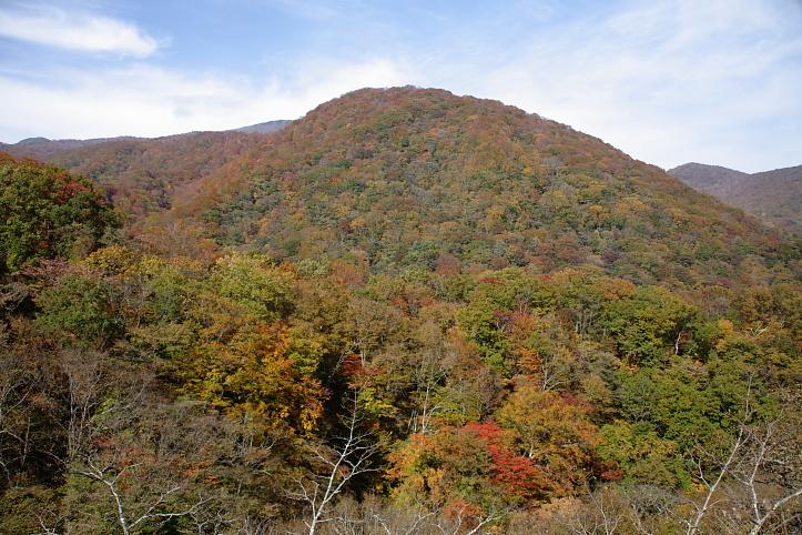 西郷村 甲子高原・きびたきトンネルの紅葉 _e0165983_10515199.jpg