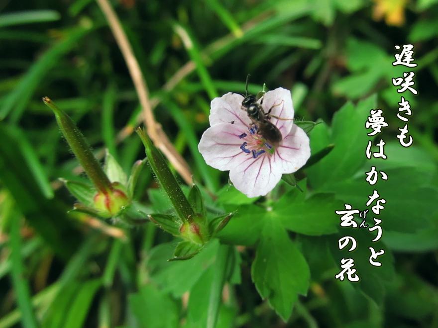 f0137096_16231681.jpg