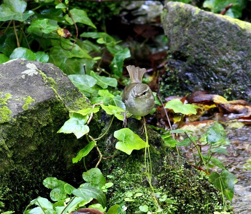 関西では見れないオナガを・・・_c0213607_2046752.jpg