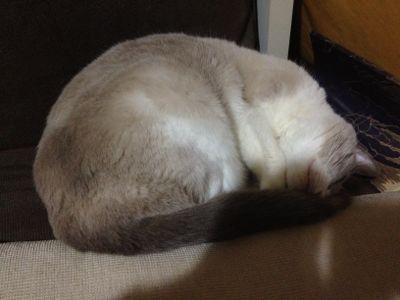 ネコのゴロゴロ_e0239908_21222990.jpg