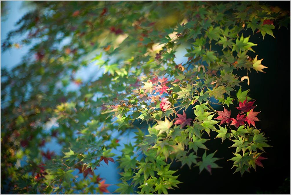のんたん秋の別邸 II  mansion for autumn II #LEICA M_c0065410_19544969.jpg