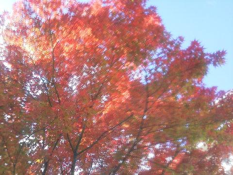 秋の寄居_b0050651_18215088.jpg