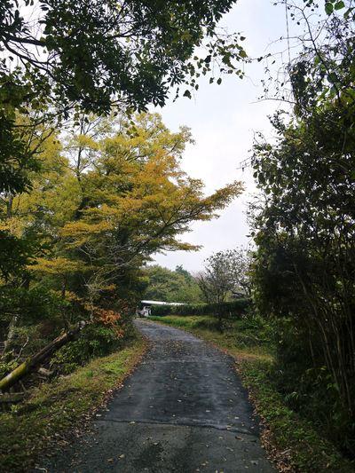 秋の収穫は油断大敵!お化けしいたけとキウイのお話!!_a0254656_17503698.jpg