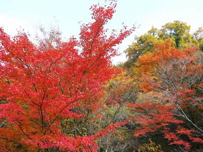 秋の収穫は油断大敵!お化けしいたけとキウイのお話!!_a0254656_18474220.jpg