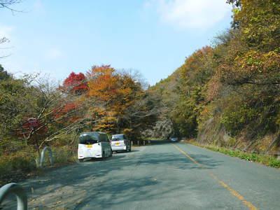 秋の収穫は油断大敵!お化けしいたけとキウイのお話!!_a0254656_1850144.jpg